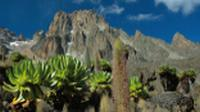 Mount Kenya with lobelia |  <i>Sue Badyari</i>