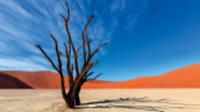Colours of Deadvlei |  <i>Peter Walton</i>