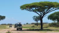 Safari jeeps roam Tarangire National Park in search of wildlife |  <i>Chloe Ryan</i>