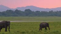 Wild elephants enjoying the sunset |  <i>Alex Robertson</i>